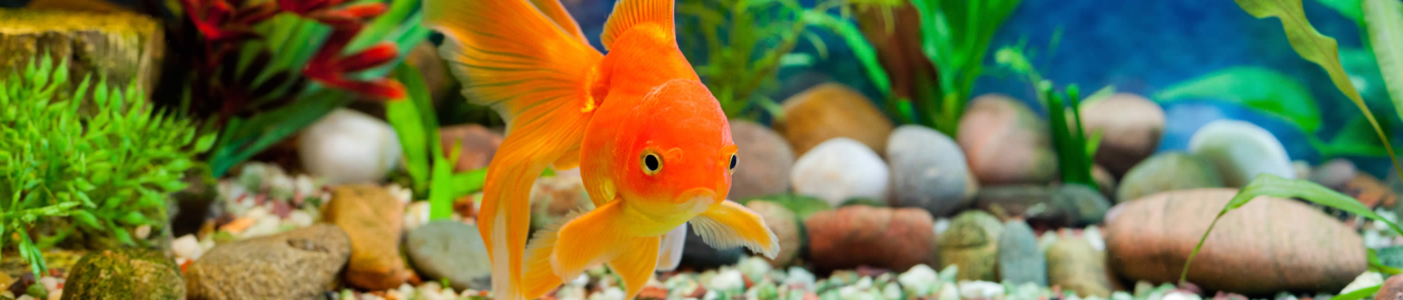 200 Most Popular Fish Names (100 Boy & 100 Girl) - Petset com