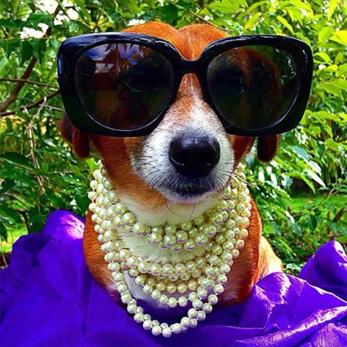 Best-Dressed-Dogs-Isadora-Campos-Sullyburger-com