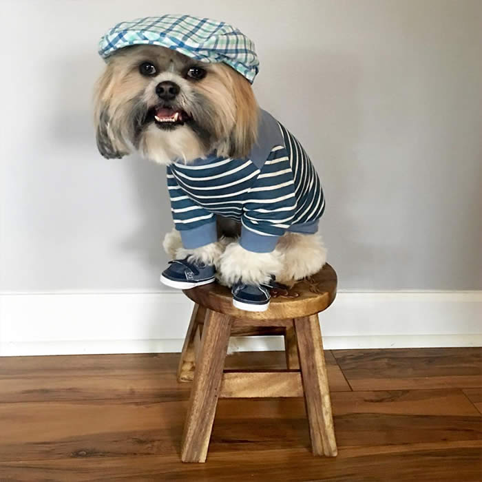 Best-Dressed-Dogs-Max-ShiTzu-Sullyburger-com