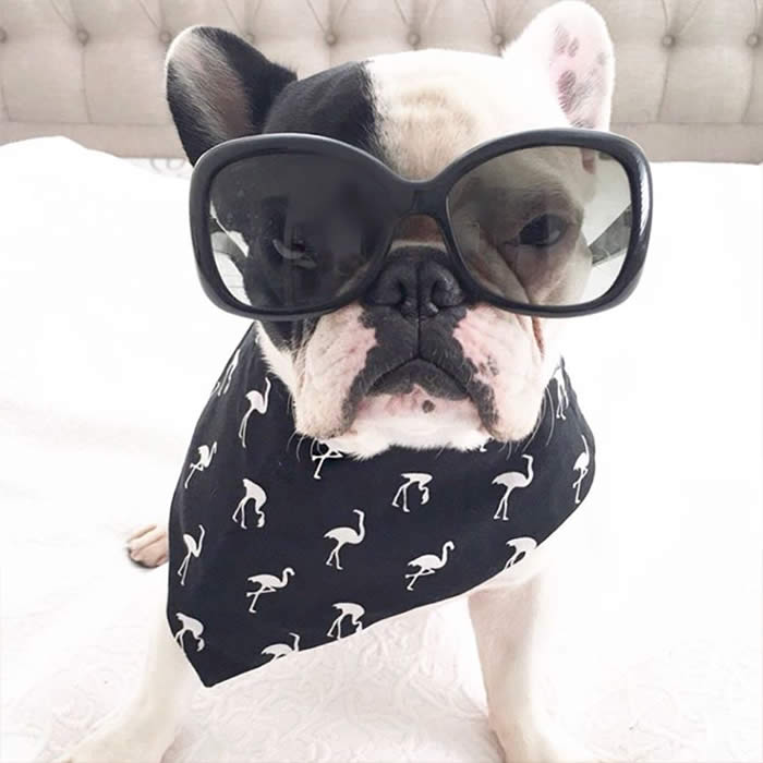 Best-Dressed-Dogs-Miss-Olive-Sullyburger-com