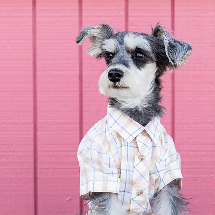 Best-Dressed-Dogs-Remix-Dog-Sullyburger-com