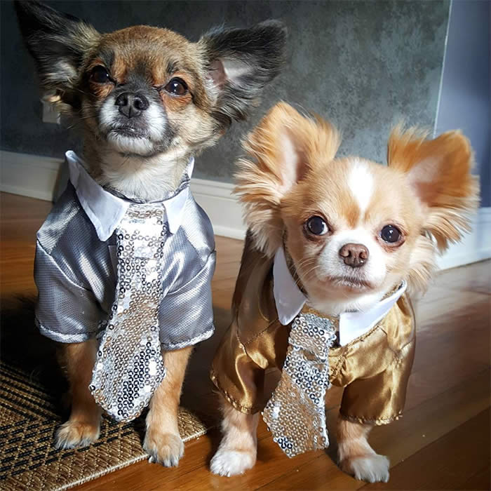 Best-Dressed-Dogs-Yeyush-Renzo-Sullyburger-com