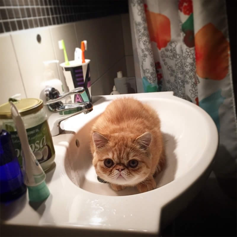 Cats-Chilling-in-Sinks-athomewithfrans-Sullyburger-com