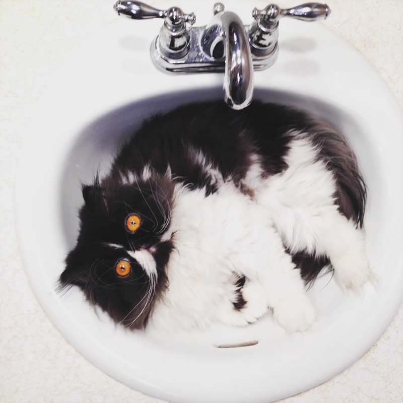 Cats-Chilling-in-Sinks-ginners88-Sullyburger-com