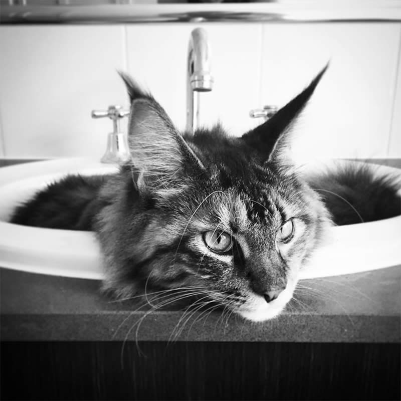 Cats-Chilling-in-Sinks-peanut-the-Sullyburger-com