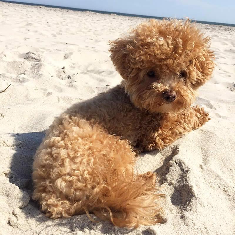 Cute-Puppies-bubbbba-Sullyburger-com