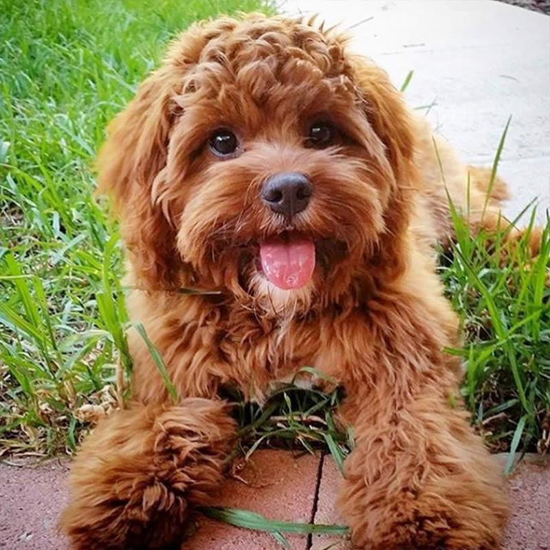 Cute-Puppies-doodletales-Sullyburger-com