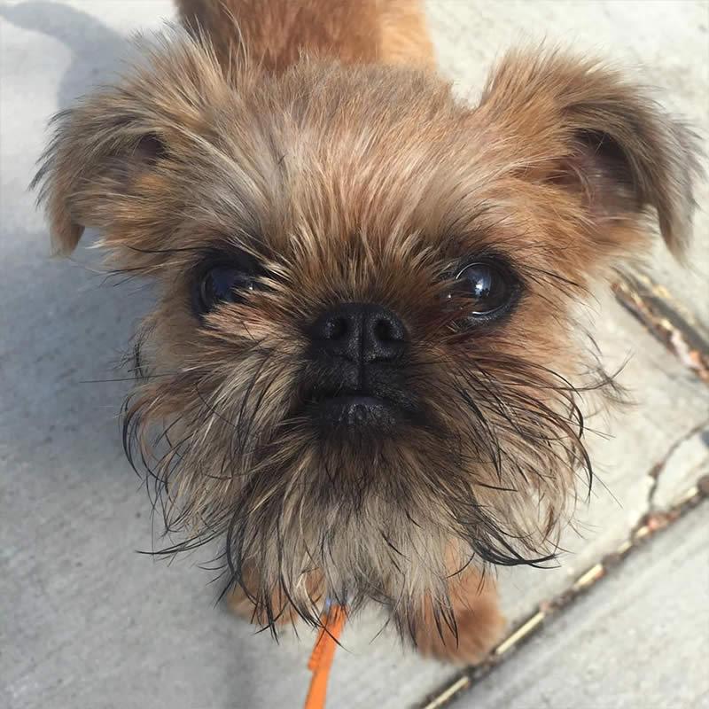 Cute-Puppies-meghan-mc-Sullyburger-com