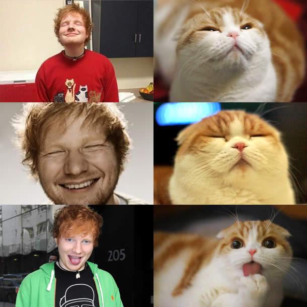 Ed-Sheeran-vs-Waffles-the-Cat-Sullyburger-com