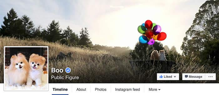 Facebook-Boo-Sullyburger-com