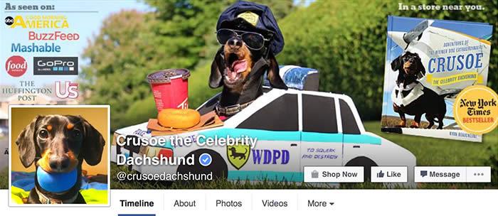 Facebook-Crusoe-Dachshund-Sullyburger-com