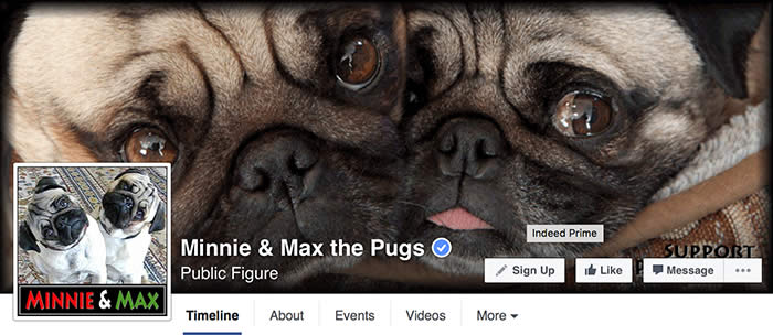 Facebook-Minnie-Max-Pugs-Sullyburger-com
