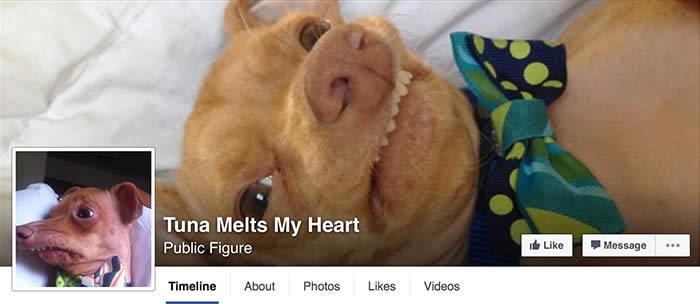 Facebook-Tuna-Melts-My-Heart-Sullyburger-com