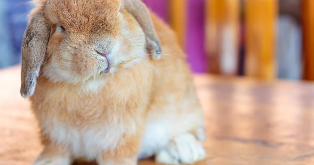 200 Most Popular Bunny Names (100 Boy & 100 Girl) - Petset com
