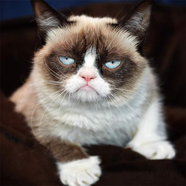 Top-10-Most-Famous-Internet-Cats-01-Grumpy-Cat