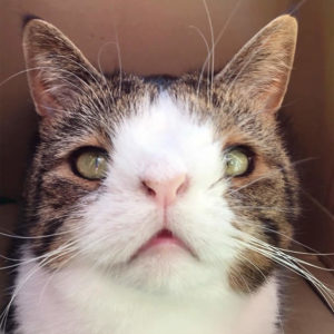 Top-10-Most-Famous-Internet-Cats-07-Monty-the-Cat