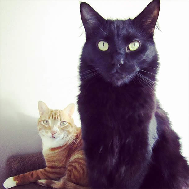 Top-10-Most-Famous-Internet-Cats-08-Cole-and-Marmalade