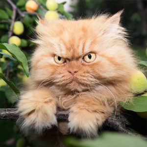 Top-10-Most-Famous-Internet-Cats-09-Garfi-the-Angry-Cat