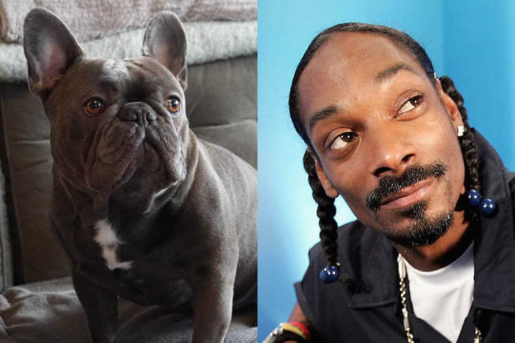 Frank-Frenchie-vs-Snoop-Dogg-Sullyburger