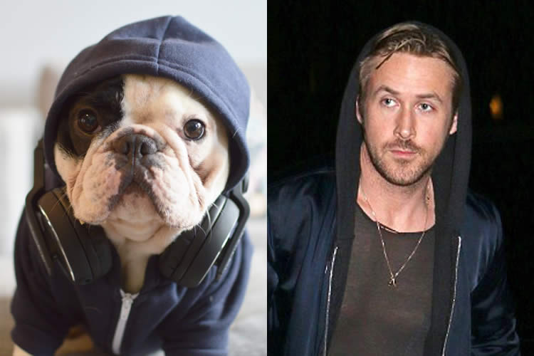 Manny-Frenchie-vs-Ryan-Gosling-Sullyburger