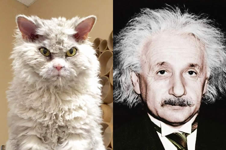 Pompous-Albert-vs-Albert-Einstein-Sullyburger