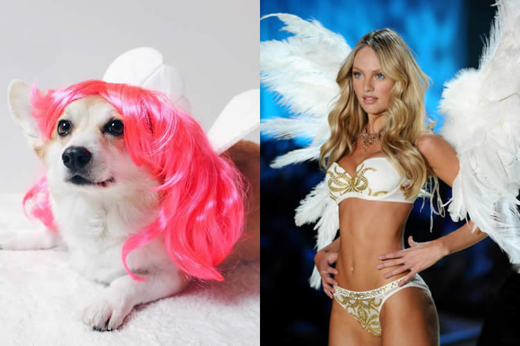 Sneakers-Corgi-vs-Victoria-Secret-Model-Sullyburger