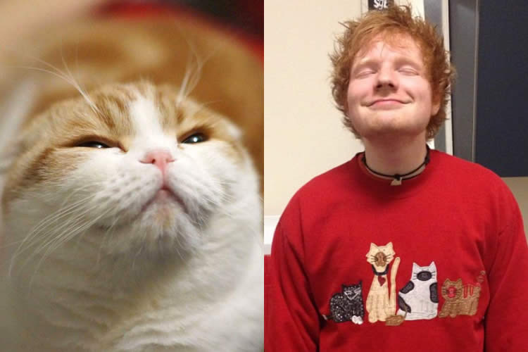Waffles-Cat-vs-Ed-Sheeran-Sullyburger