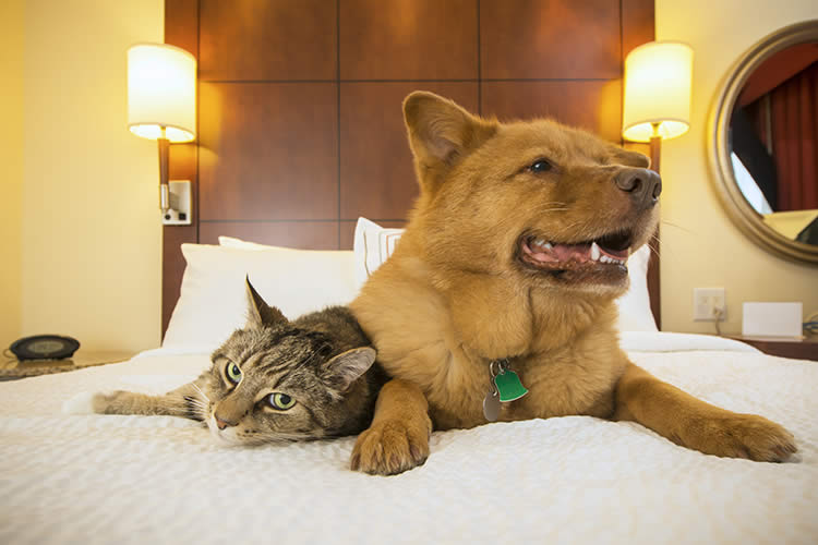 The Best Pet Friendly Hotels