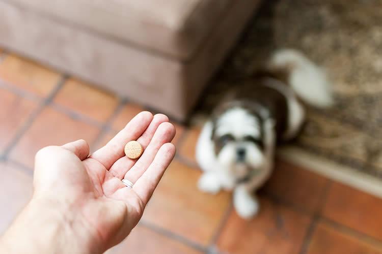 Can I Give A Small Dog Aspirin