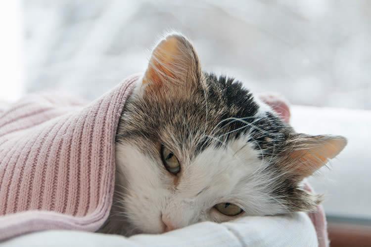 tabby cat hearthstone