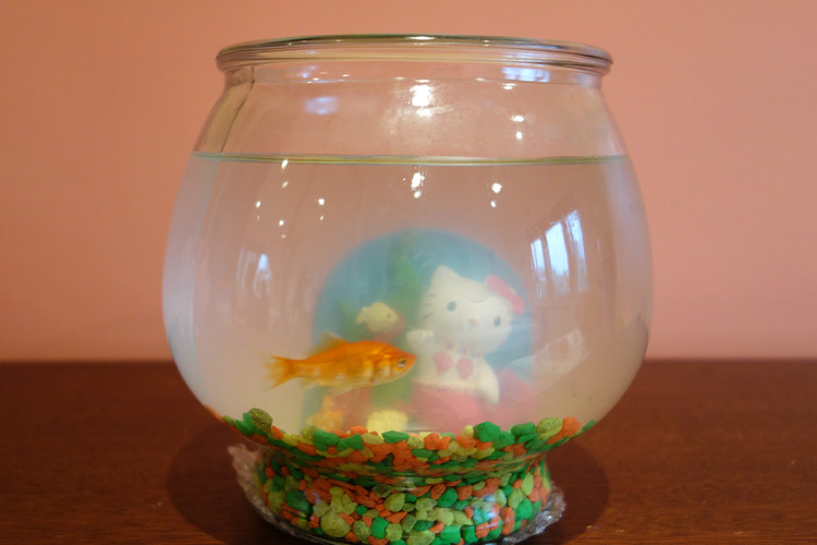 Why Does Goldfish Water Turn Cloudy Petset