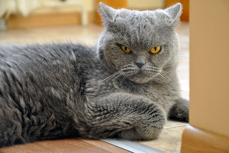 My Cat Hates My New Dog - Petset.com